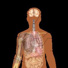 Gejala Ebola. Sumber wikipedia: http://en.wikipedia.org/wiki/Ebola_virus_disease